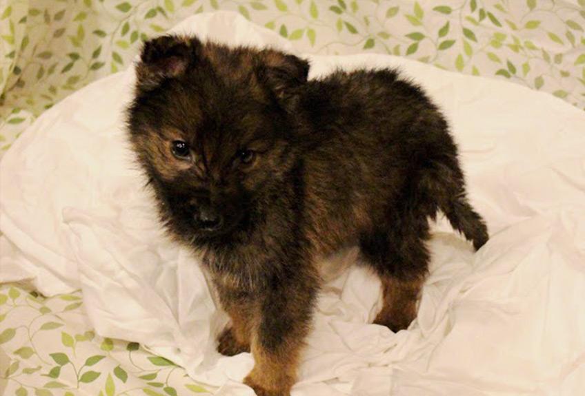 Cutie-Bear