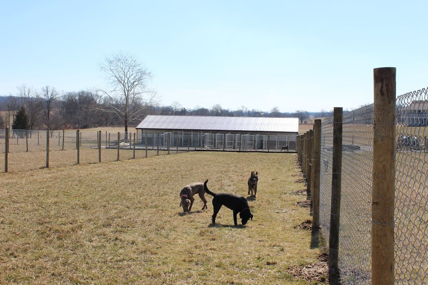 Dogs playing in the boarding and daycare fields. Sweet Pea Kennels has the largest play fields of any dog boarding facility in Cape Girardeau County.