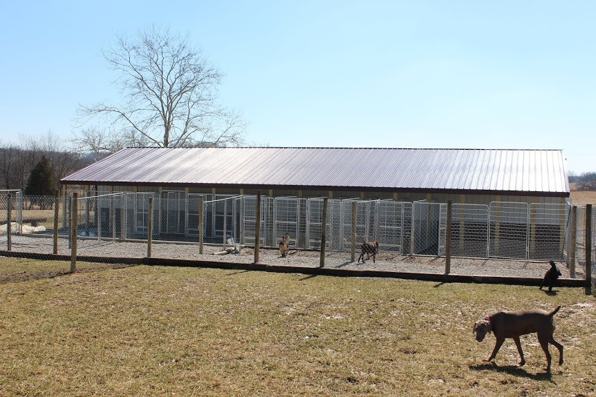 A view of Sweet Pea Kennels outdoor runs and play areas. We have the largest boarding and daycare facility in the Cape Gir