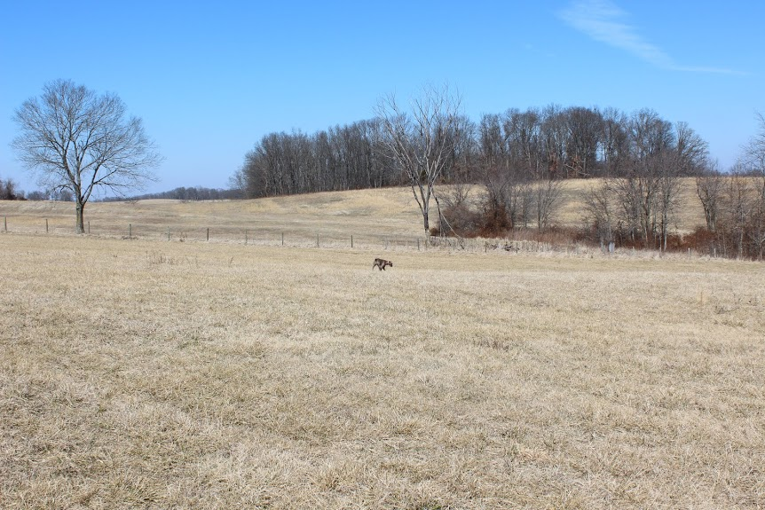 Sweet Pea Kennels has plenty of room to grow. We are located on 20+ acres in the northern part of Cape Girardeau County. (Jackson, MO)